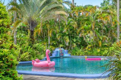 Pink-Flamingo.jpg